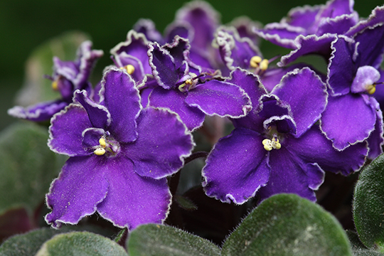 "Best of the ""C"" List: Colorful Foliage Plants for the Garden"