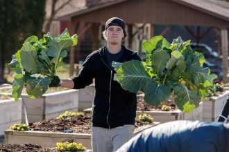 A volunteer harvests collards at the GCF farm in RTP.