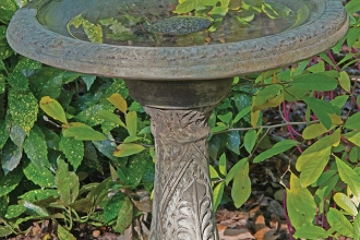 Place a flat rock in the center of the birdbath to offer a safe perch for small birds.