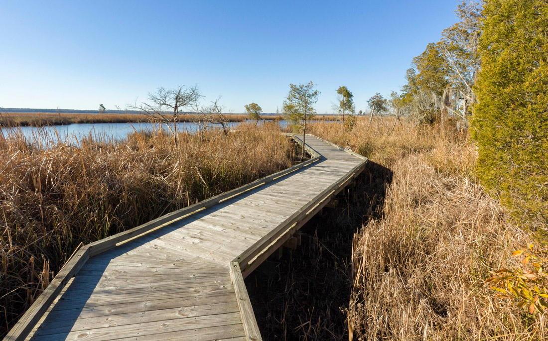 A boardwalk leads visitors through a cypress swamp to the open waters of the Pamlico River at Goose Creek State Park, containing eight miles of trails through live oak forests and along the creeks and wetlands of the Pamlico.