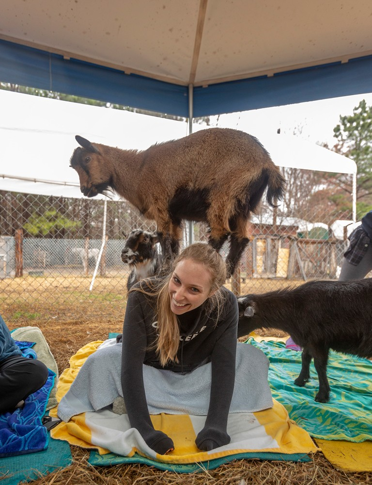 Kaitlin Walker of Apex laughs as a Nigerian Dwarf goat works on its baa-lance during a Saturday morning yoga class.