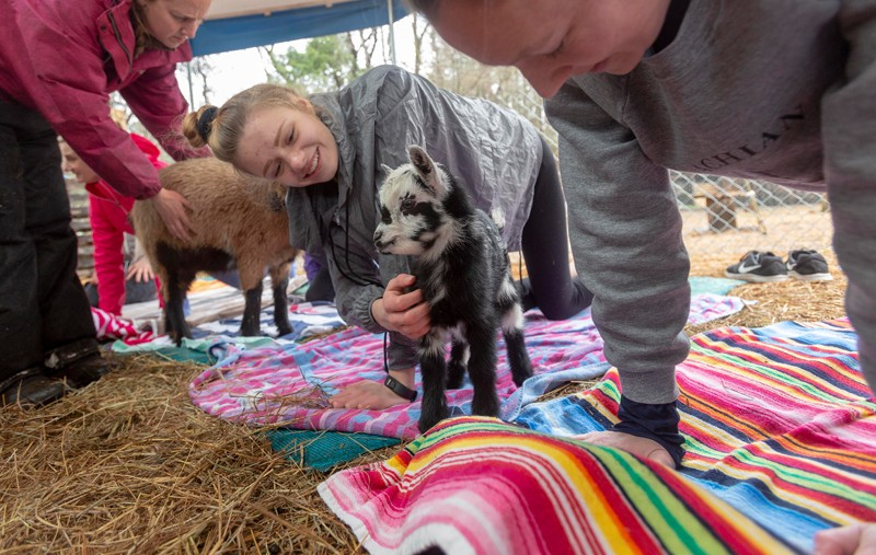 """Elliot Worth, 14, of Raleigh, takes a break from yoga to pet a baby goat. Amanda Avery, co-owner of Hux Family Farm, says the goats are """"a happy mix between a cat and a dog. They are independent, but they really love attention."""""""