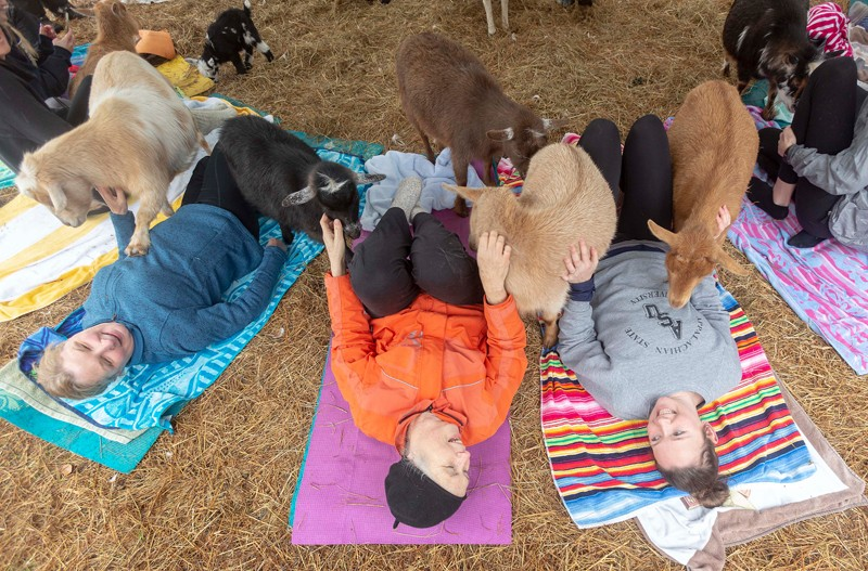 Mary Beth Walker of Boone, left, Jean Toleman of Frederick, Md., center, and Marie Walker of Apex signed up for goat yoga at the Hux Family Farm as part of a weekend celebrating Toleman's 60th birthday. There are 26 goats on the farm as well as sheep, ducks, a pig and a couple of dogs.