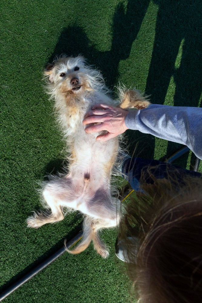 Although dogs come to Pupsi to play with each other, there is still time for plenty of belly rubs from the humans.